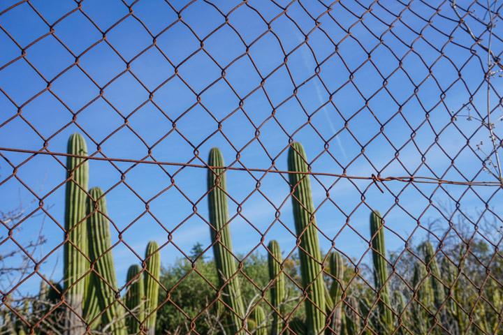 Cactus en el camino de Reus a Riudoms