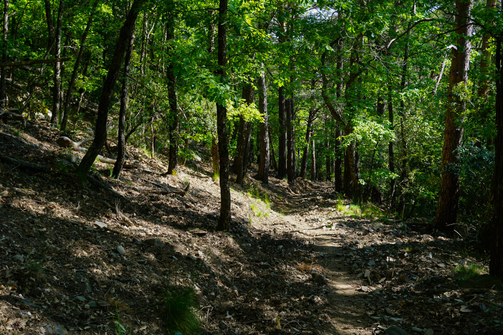 Sendero en el Bosc Pintat de Poblet