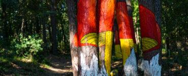 Ou de Reig del Bosc Pintat de Poblet